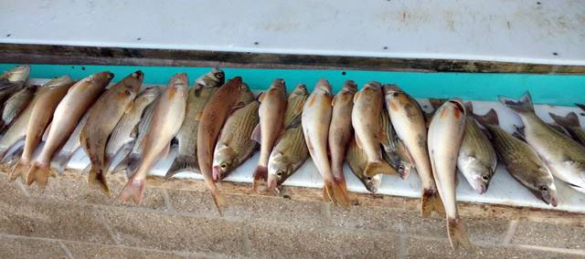 Lake Shelbyville Fishing Report